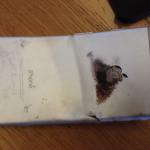 L'iPhone 6 d'un américain s'est plié et enflammé lors d'un accident