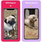 Dogcam app iphone 150x150 - App du jour : Sing! by Smule (iPhone & iPad - gratuit)
