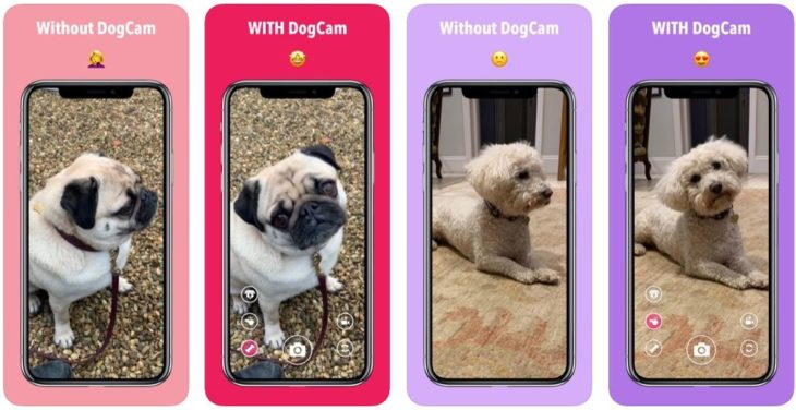 App du jour : DogCam – Dog Selfie Camera (iPhone & iPad – gratuit)