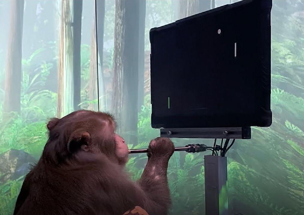 Neuralink d'Elon Musk publie une vidéo d'un singe jouant au Pong avec son esprit